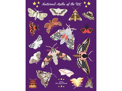 Night Explorer book illustrations-Moths