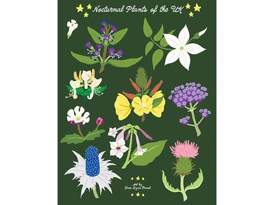 Night Explorer book illustrations-Nocturnal Plants