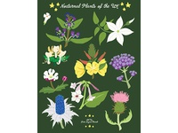 Night Explorer book illustrations-Nocturnal Plants