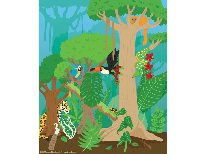 Rainforest Illustration monkey poison dart frog toucan jaguar sciart natural science biology educational illustration animals rainforest education pearson