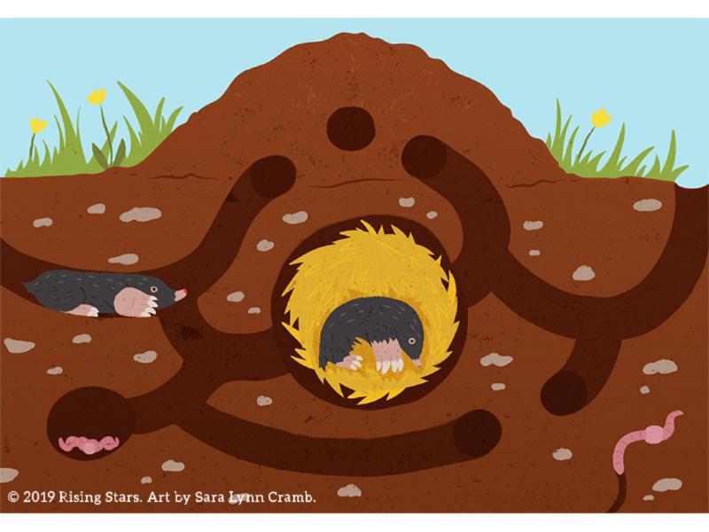 Mole hill cross section kidlitart childrens publishing sciart burrow mammal digging shelter animal behavior wildlife animal habitat tunnel mole hill mole