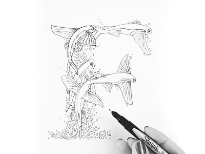 F is for Flying Fish illustration typography type lettering f