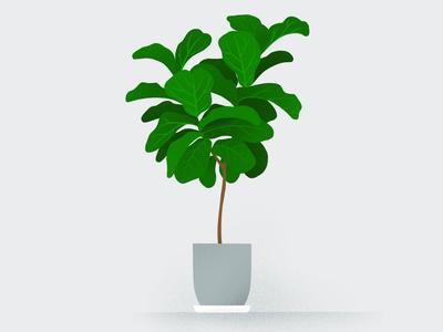 My Plants: Figaro plant illustration illustrated hand-drawn procreate illustration fiddle leaf fig ficus plants plant