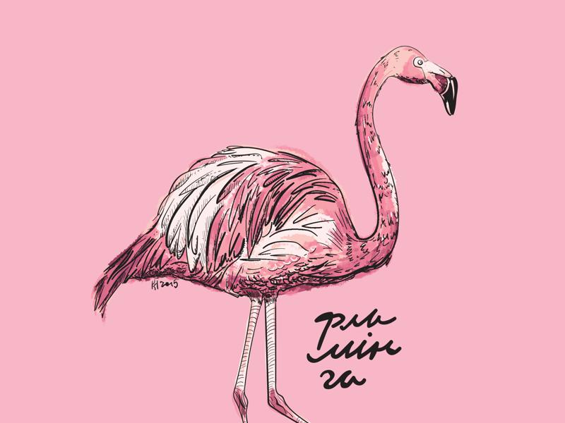 вот фламинго картинки приколы формат организации досуга