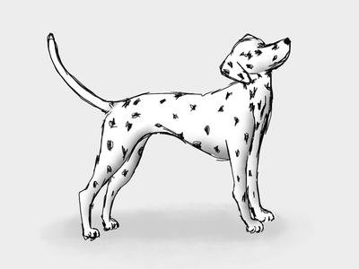 Dalmatian sweetheart
