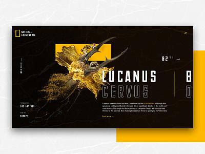 Lucanus Cervus digital insects ux ui redesign alternative national geographic black webdesign promo design minimal web