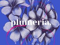 plumeria illustration