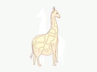Big Wild Giraffe