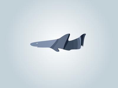 Shark Shadows
