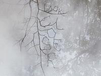 Twig Type Detail