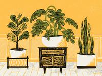 House plants sans texture