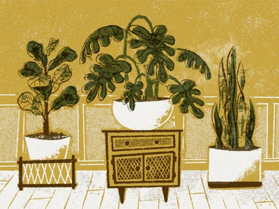 House Plants furniture plants texture mid century mid century modern illustration