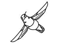 36 days of type - X (Xantus's Hummingbird)