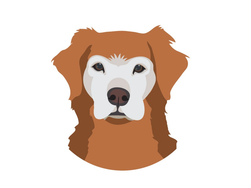 Golden Retriever Illustration bird dog sr dog golden retriever illustration dog