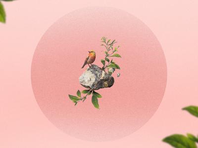 Vintage Bird pink vintage bird illustration
