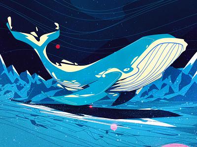 Megaptera walle brazilian illustrator vector illustration