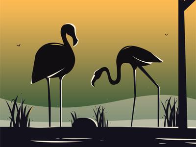 Flamingo flamingos play grass birds nature water bird flamingo