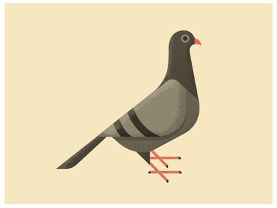 SF Pigeon