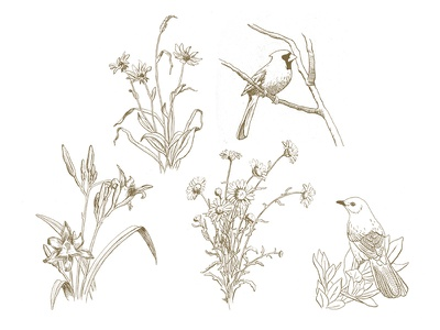 More Drawings day lily mocking bird daisies graphite drawing illustration flowers birds cardinal