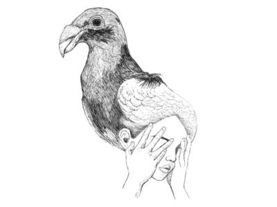 Darwin's Pigeon 1