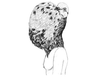 Darwin's Pigeon 2
