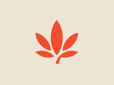 Quanoeed cannabis logo concept. symbol mark designer design logo cannabis cannabis logo