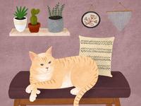 Cat portrait boho style