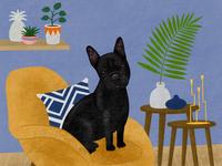 Black French bulldog portrait