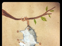 Opossum web