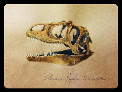 Allosaurus fragilis illustration allosaurus dinosaur watercolor sketchbook