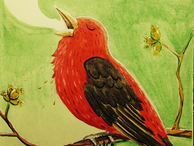 Scarlet Tanager (Piranga olivacea) sketchbook illustration watercolor scarlet tanager bird