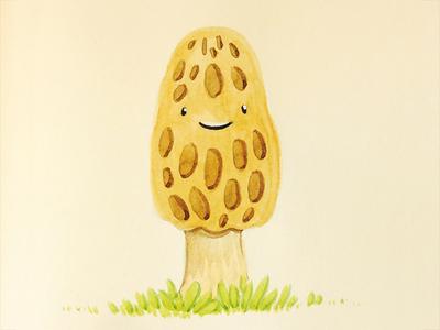 Morel Mushroom  illustration watercolor morel mushroom sketchbook