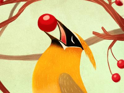 Cedar Waxwing (Bombycilla cedrorum) photoshop cedar waxwing illustration bird