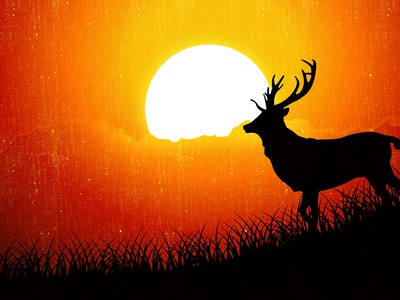 Sunrise time deer illustration