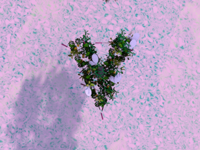 Type and nature pink air land sky typography plants leaves nature