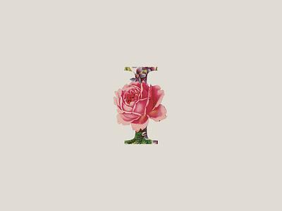 Vintage and Floral Font dribbblefont weddingfont trendfont retrofont happyfont fontforinvitation font flowerfont floralfont bestofdribbble bestofbehance vintage