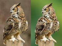 Owl Vector Art