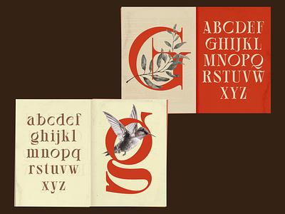 Willton multipurpose display font lettering illustration logo designs display font flat modern type art type design branding wordmark typeface type font