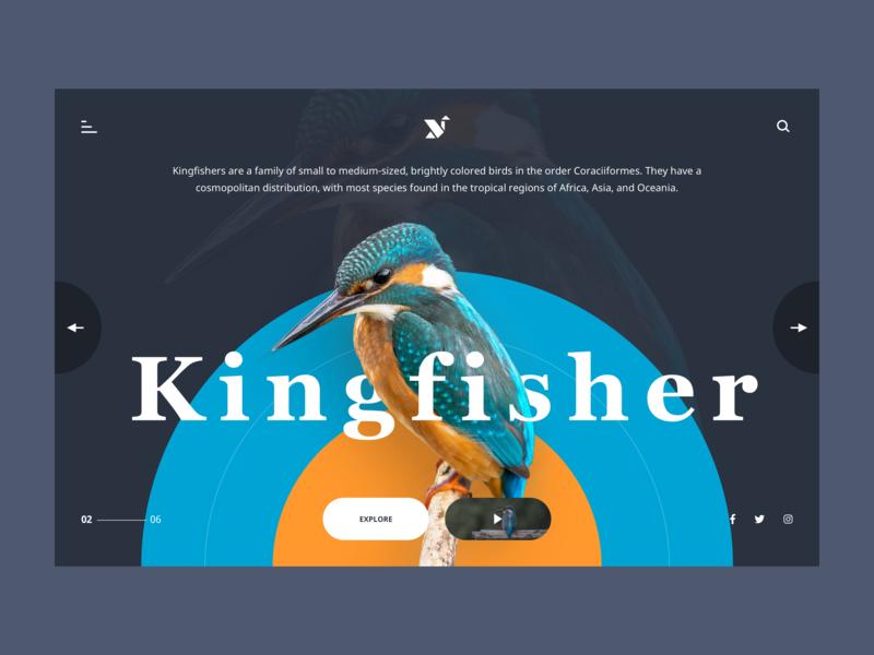 Kingfisher Web Page UI uiux ui design website design website typography dribbble graphic minimal design ui