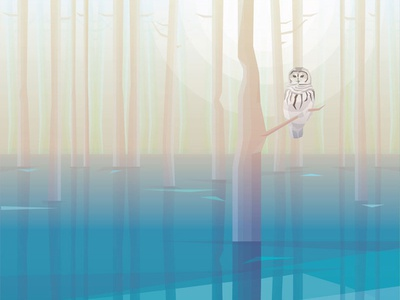Barred Owl In The Misty Swamp Forest barred owl wilderness illustration vector contemporary nature animal woods forest flood swamp
