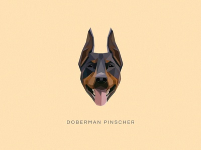 Doberman Pinscher Vector Illustration