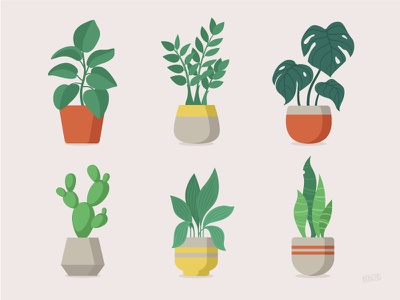 Indoor Plants Set print illustrator illustration app design flat nature leaves vector green plant