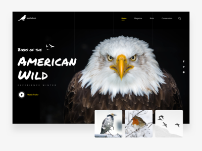 Audubon Hero Website Design