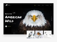 Audubon Hero Website Design