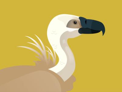 Endangered Species - Griffon Vulture