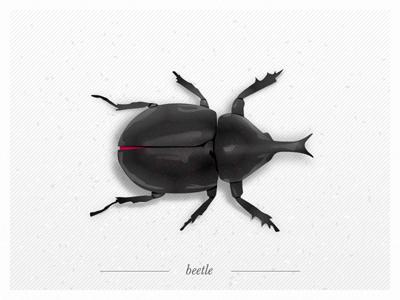 B - beetle