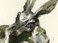 Hare Detail