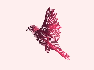 Bird Vector Design - Blend Tool, Adobe Illustrator web bird minimal css mobile lettering website typography animation ux ui identity flat vector clean branding icon illustration logo design
