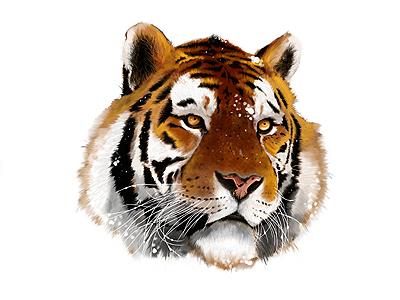Tiger  tiger illustration painting animal art