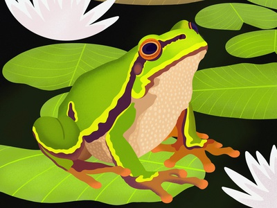 Lilypads logo animal books wildlife frog animals illustrated animals design colorful digital art editorial childrens books graphic art editorial illustration nicole wilson illustrator illustration